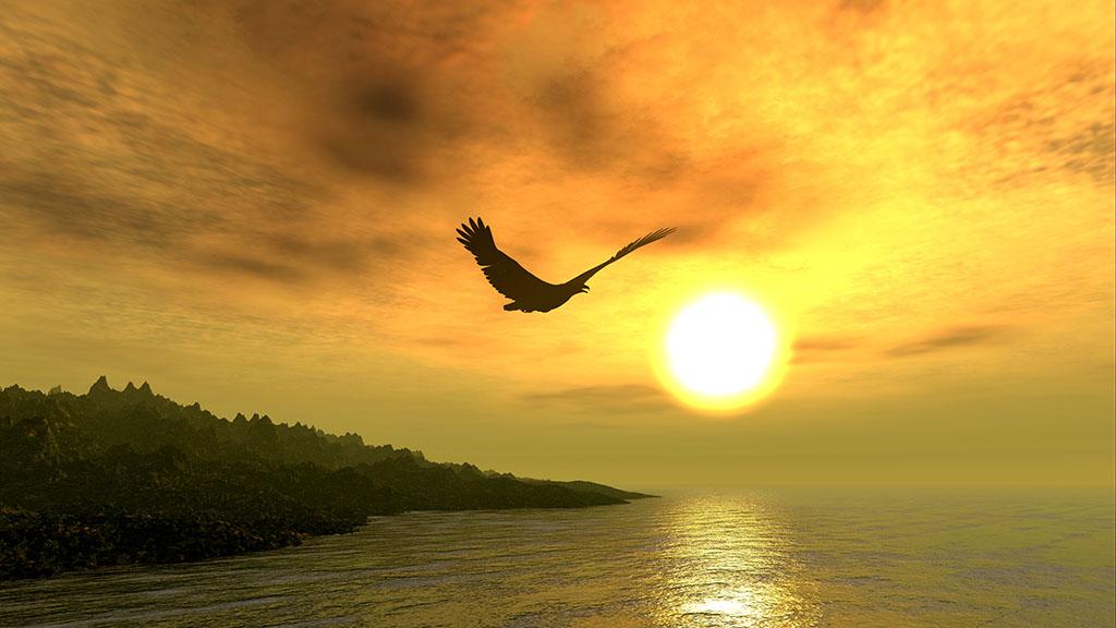 0SLH-Sonne-Vogel_W